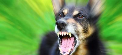 Dog Bite Injury Claims