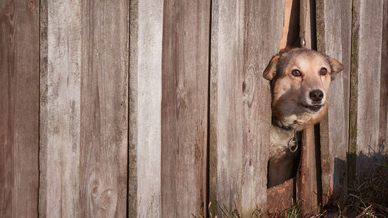 Good Fences Tend to Make Dogs Much Better Neighbors